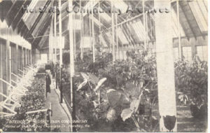 During the winter months, conservatories were used to propagate seedlings for the ourdoor flower beds. ca1910