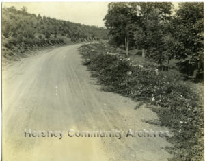 Drive to Pat's Hill. ca1915-1924