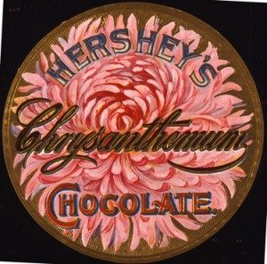 Hershey Chocolate Chrysanthemums. ca.1895-1909