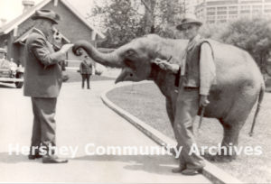 Milton Hershey visits with the Zoo's newest addition, a baby elephant, ca. 1935-1940