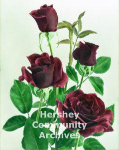 Milton Hershey Rose, 1940